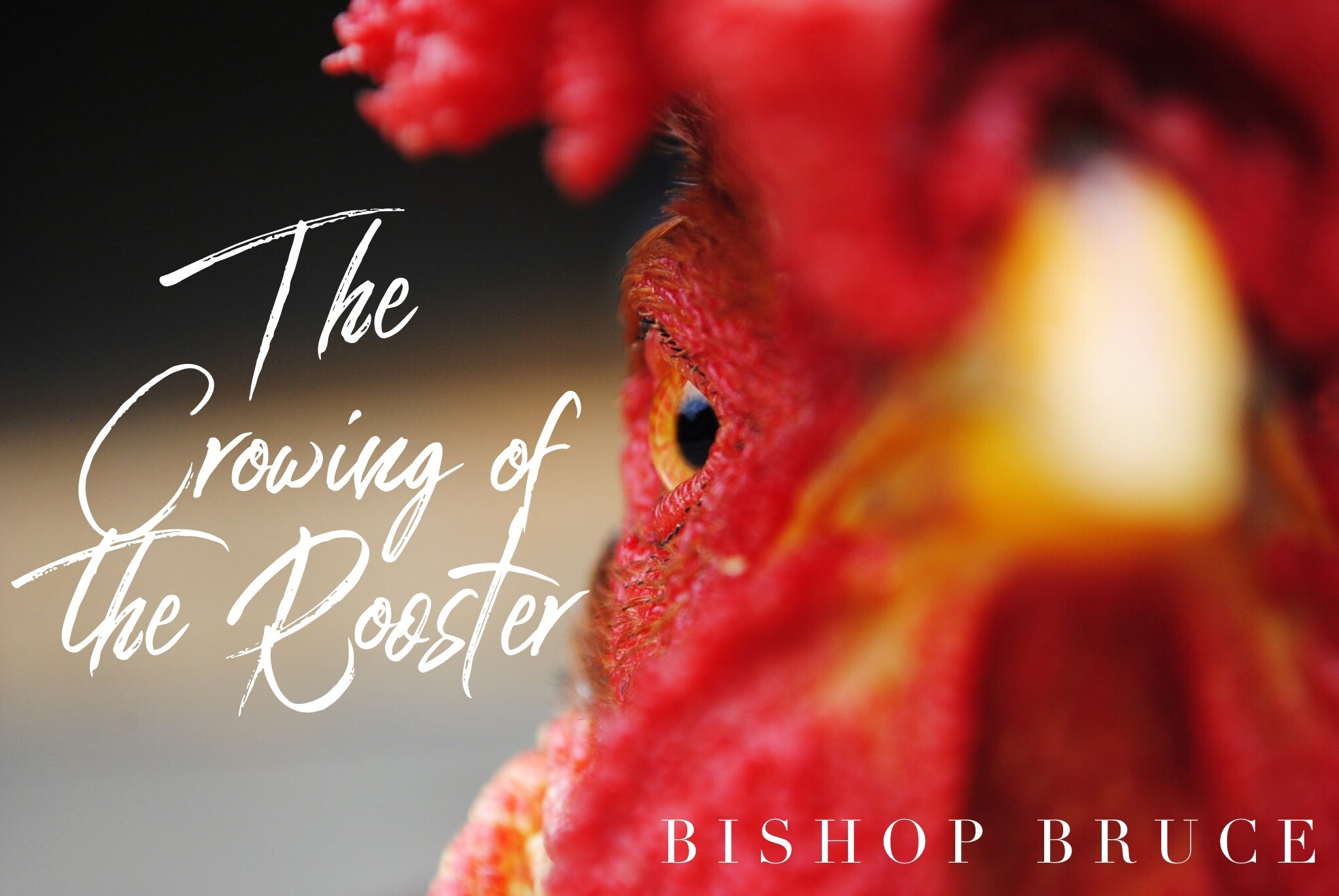The Crowing of the Rooster