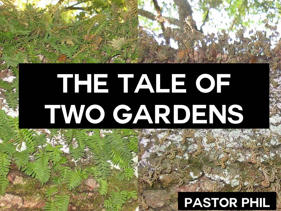 The Tale of Two Gardens