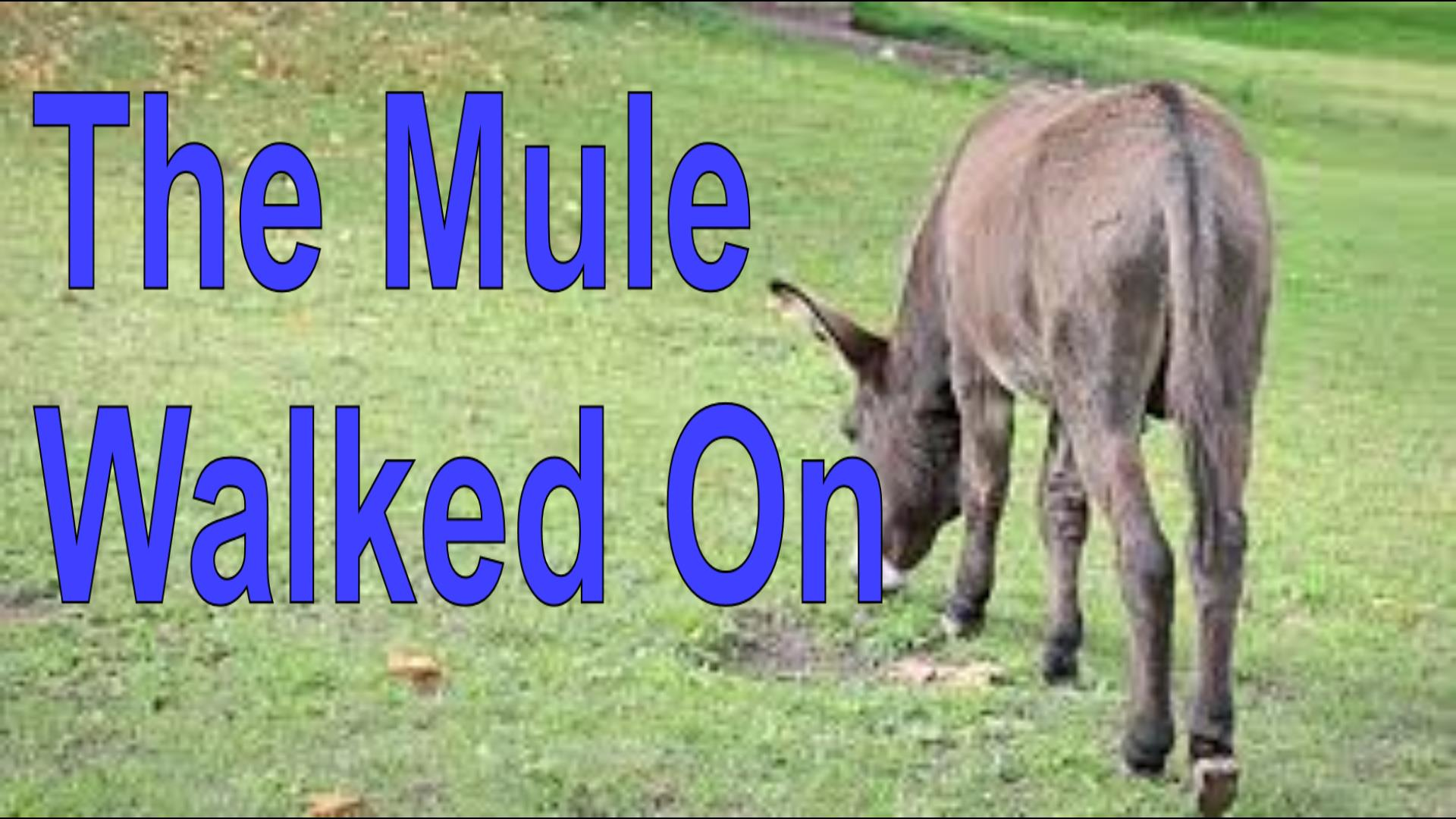 THE MULE WALKED ON